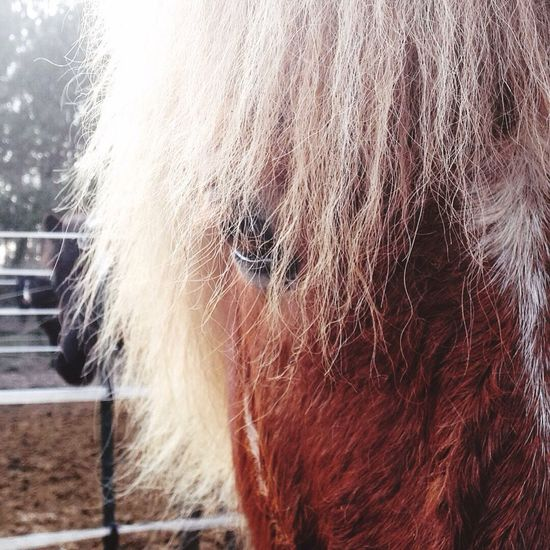 ervar❤️ Pferde Pony Love Horses Horses My Sweet Horse❤❤