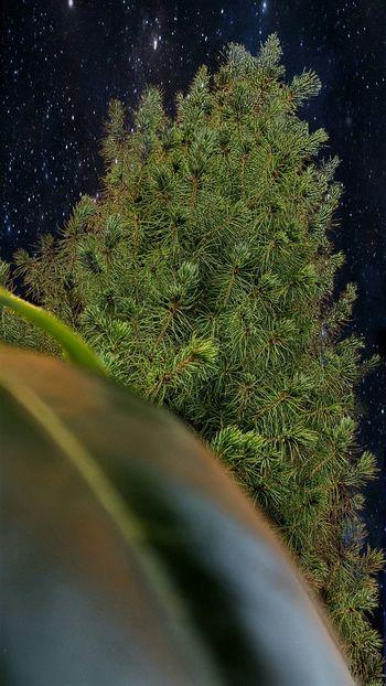 Merry Christmas Merry Christmas Christmas Christmas Tree Nature Natur Green Grün Tree Baum Sky Himmel Star Stars Stern Sterne  Universe Universum Galaxy Galaxie  Weihnachten Feiertage