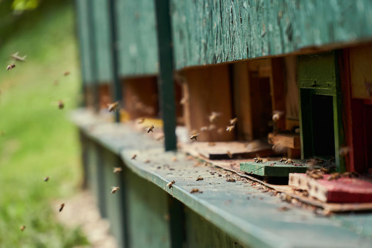 Close-up of honey bees buzzing by wooden containers