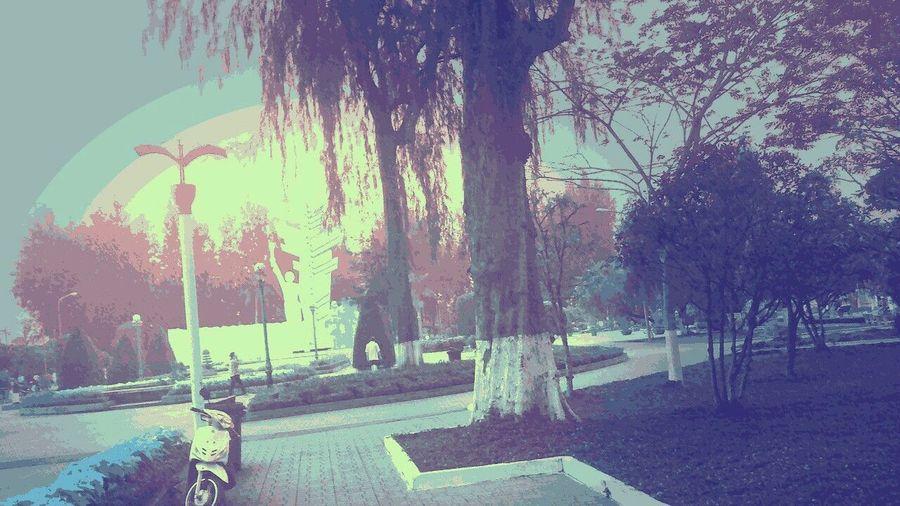 Viet nam First Eyeem Photo Welcome To Black Sky Sunnyday 🌸🌷🌿 Bymyphone