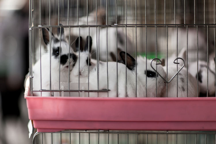 Close-Up Of Rabbits In Cage For Sale At Market