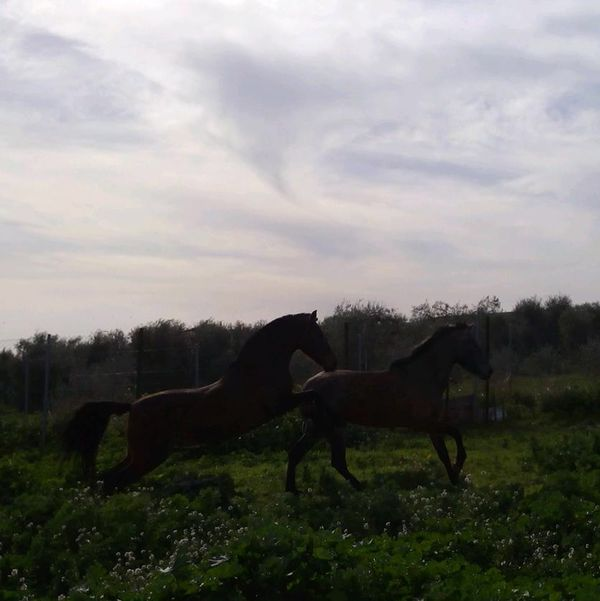Caballos Horses Caballo ESPAÑOL Beautiful