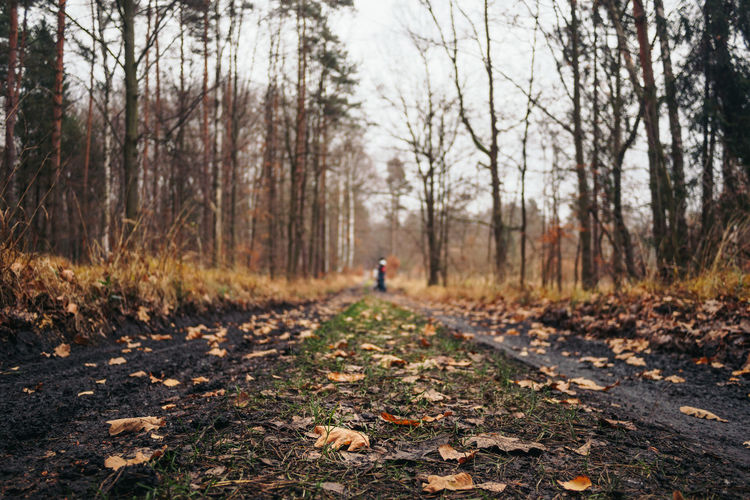 Autumn Beauty In Nature Change Day Fallen Focus On Foreground Footpath Forest Landscape Leaf Nature One Person Outdoors People Scenics Sky The Way Forward Tranquility Tree Tree Trunk Walking first eyeem photo