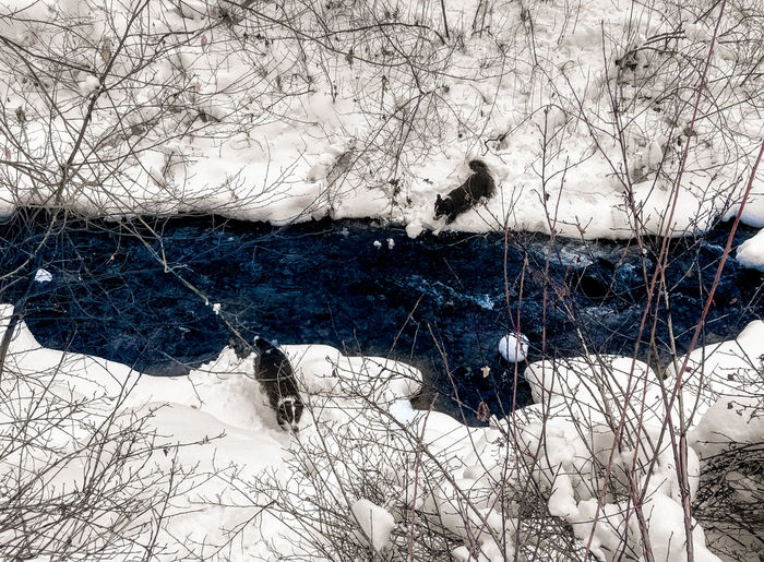 Two border collies crossing a stream in the winter, shot from above. Border Collie Creek Dogs Winter Bare Tree Beauty In Nature Branch Cold Temperature Day Dog Field Frozen Hike Mountains Nature No People Outdoors Pets River Sky Snow Stream Tree Winter Shades Of Winter