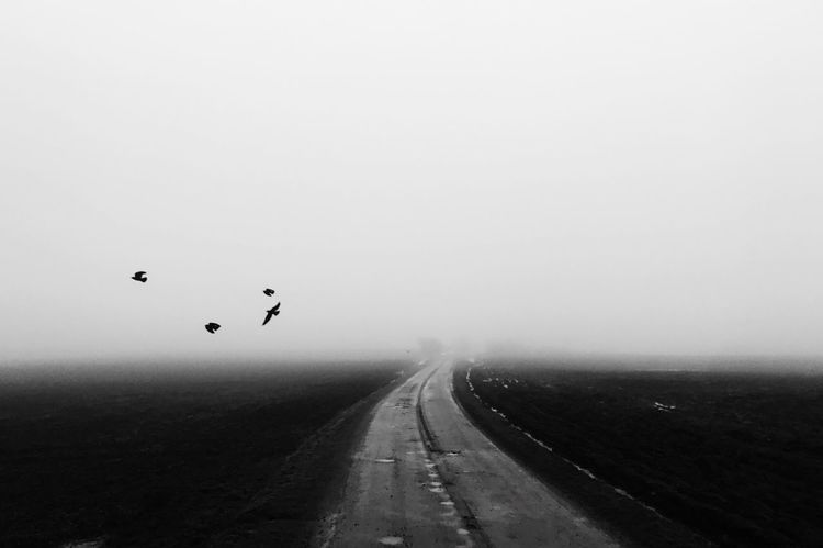 Fog Weather Nature Outdoors The Way Forward Flying Day Bird Winter Cold Temperature Animal Themes No People Scenics Beauty In Nature Sky