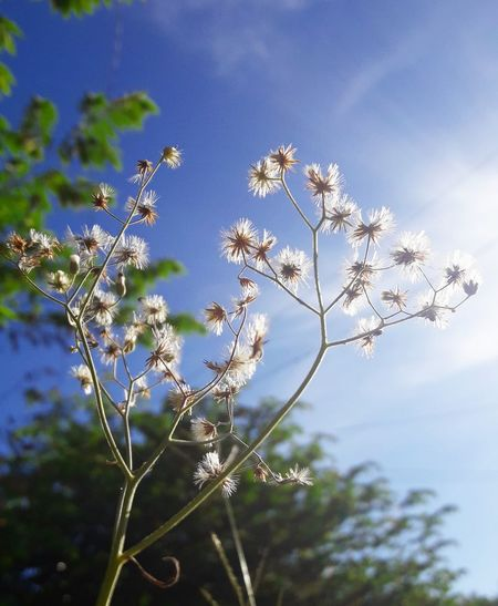 Nature Growth Plant Outdoors No People Beauty In Nature Flower Close-up Day Sky Fragility Freshness Summer Exploratorium