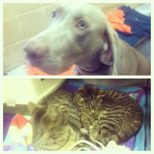 Played with the animals at the shelter today. God love 'em! I want them all!