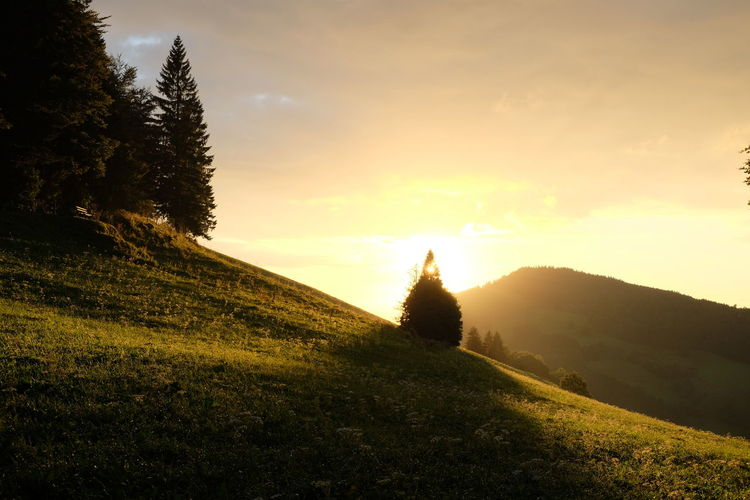 Black Forest Germany Evening Lights Landscape_Collection Pasture Schwarzwald Silhouettes Trees Beauty In Nature Conifer  Evening Landscape Mountain Meadows Mountains Nature Outdoors Spruce Trees Sunset Tranquility Tree