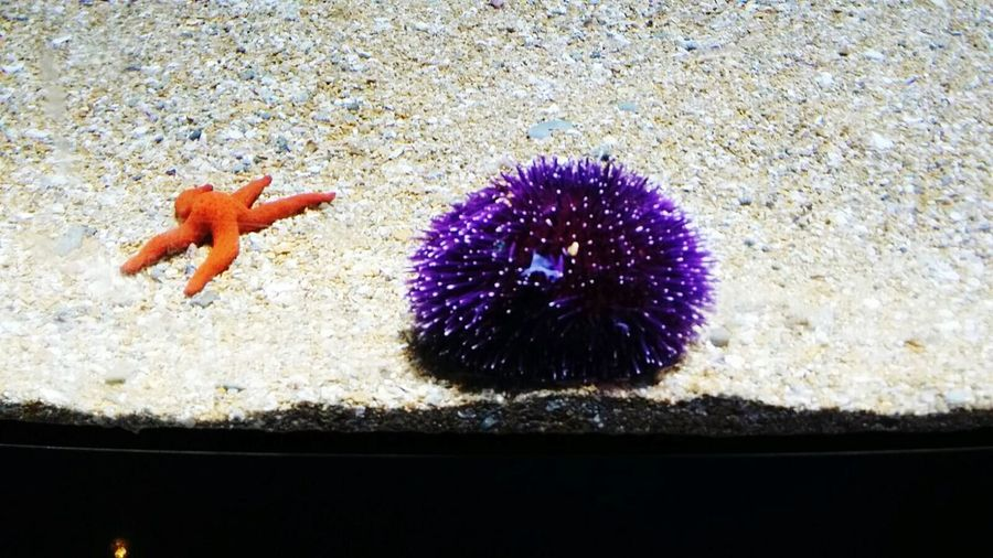 Erizo de mar Vibrant Colors Valencia City Valencia, Spain L'oceanografic Travel Photography Sea Urchins Starfishes