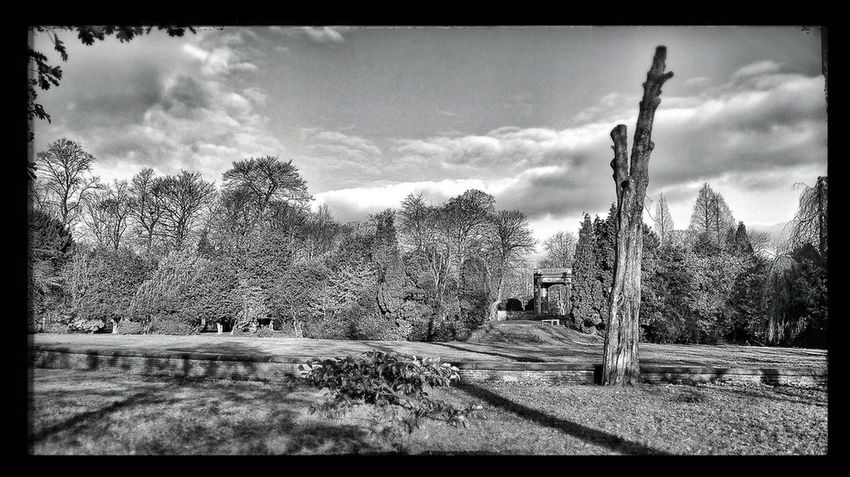 Longford Park Black And White Black & White Black And White Photography Parks Park Tree Amateur Photography Lost In The Landscape