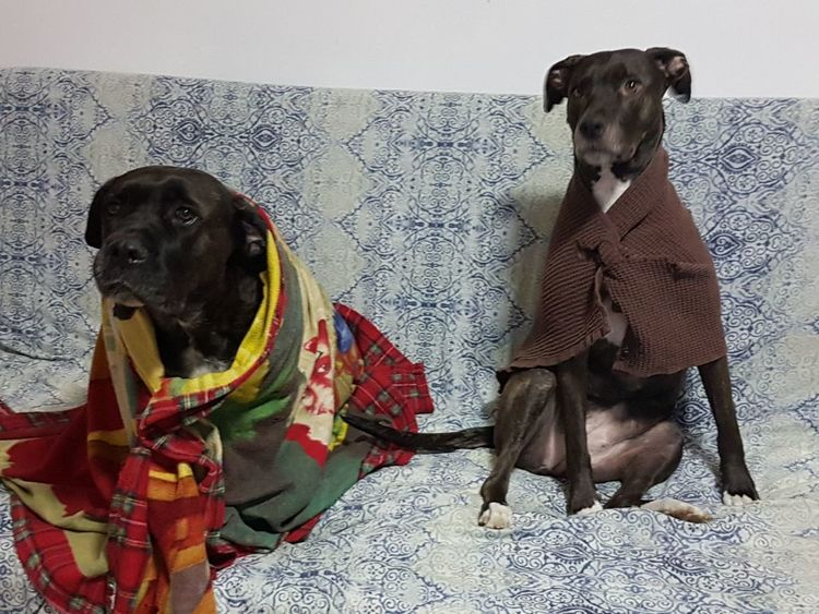 Dog Domestic Animals Pets Animal Themes
