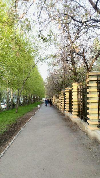Tree The Way Forward Outdoors Nature Sky Day Россия Russia Екатеринбург No Fliter  Spring Street Park