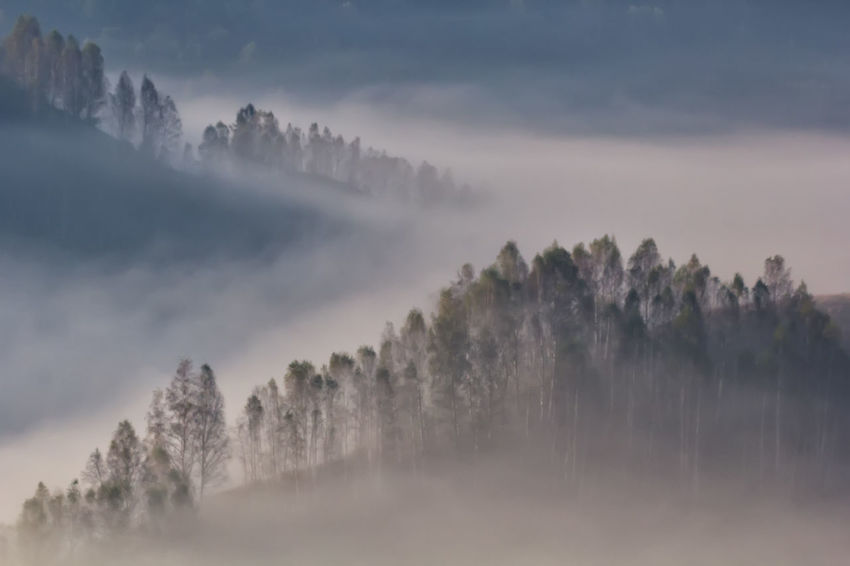 Autumn Green Color Hills Light Morning Beauty In Nature Cloud - Sky Environment Fog Forest Hazy  Land Landscape Misty Morning Mountain Nature Outdoors Scenics - Nature Season  Spring Summer Sunrise Tranquility Travel Destinations Tree