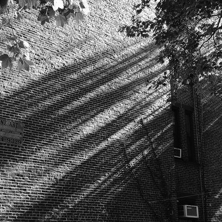 Light, filtered through trees onto a brick wall First Eyeem Photo