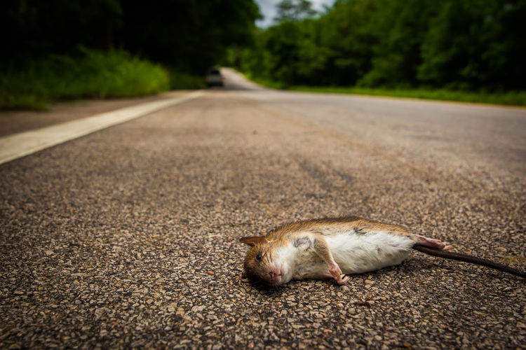 Close-up of mouse on road