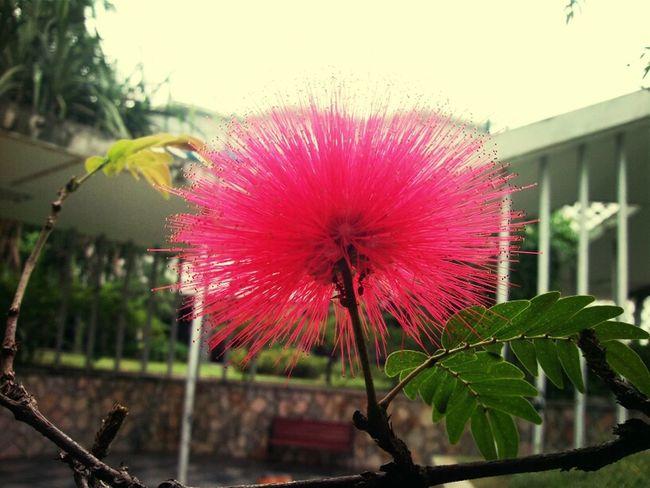 Flower Asusprime AsusTransformerPrime