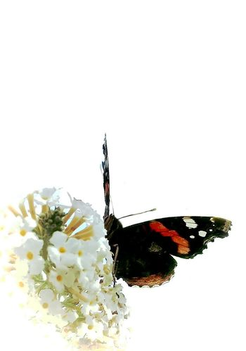 Macro Macro Nature Macro Insects Butterfly Nature EyeEm Best Edits EyeEm Best Shots AntiM Studies Of Whiteness Deceptively Simple