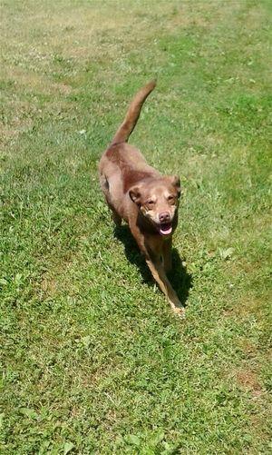 Enjoying Life Capturing Freedom Wiggles is enjoying freedom to run in her yard