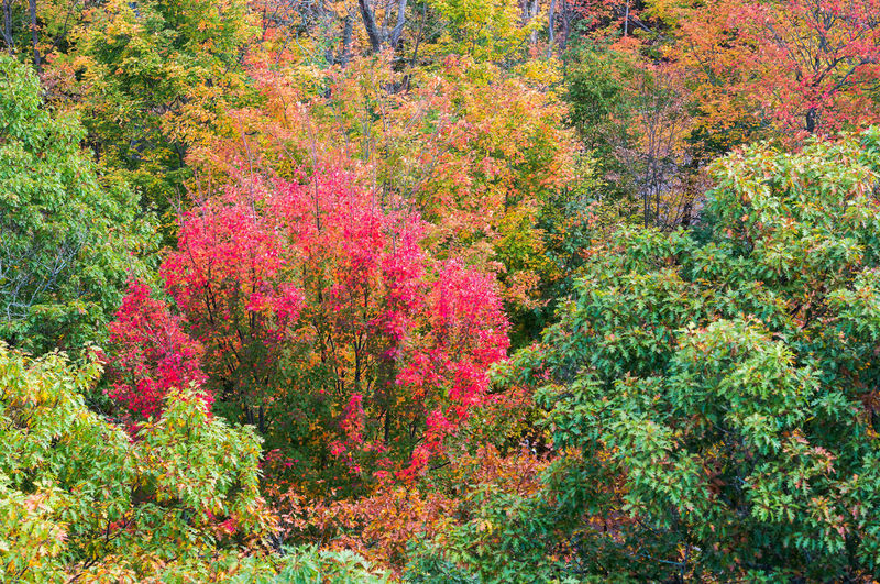 High angle view of flowering trees in forest during autumn