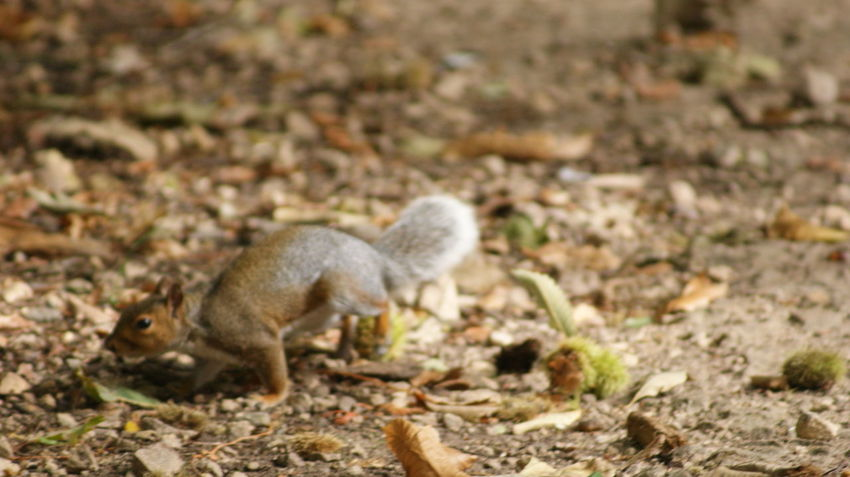 Squirrel Animal Wildlife Animals In The Wild Cute Day Environment Field Full Length Land Mammal Nature No People One Animal Outdoors Selective Focus Side View Small Vertebrate Young Animal