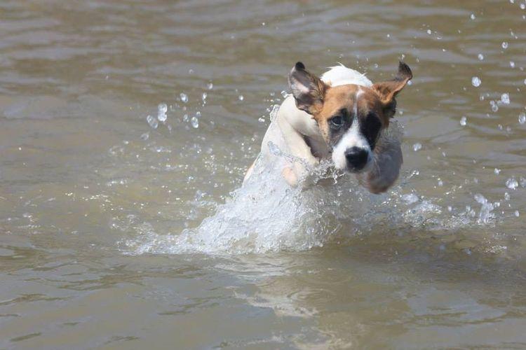 Chien , Dog , Guyane Francaise , Mer , Madrasse , Cayenne , Pets