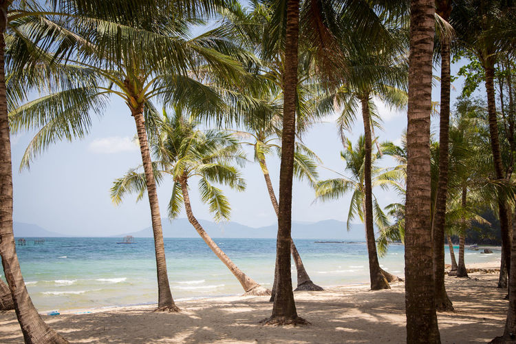 Strand Travel Urlaub Vietnam Beach Beachlife Beauty In Nature Coconut Palm Tree Day Nature Outdoors Palm Tree Phu Quoc Phu Quoc Island Reisen Sand Sandstrand Sea Sky Travel Destinations Travveling Tree Tropical Climate Tropical Tree Water