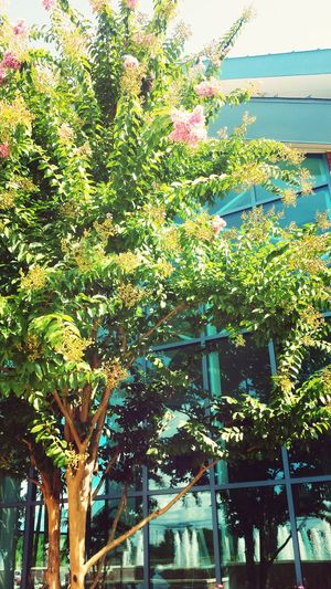 Botanical First Eyeem Photo