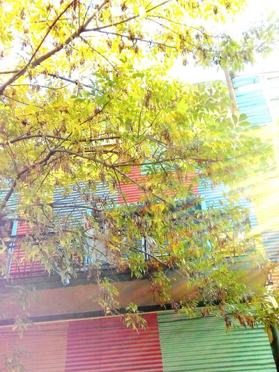 Tree Day Outdoors Buenos Aires Travel Destinations Travel Pictures Multi Colored City Argentina Bsas Front View Façade Colors Art Is Everywhere Caminito Boca Building Exterior Low Angle View Cityscape BsasCity City Views Built Structure Architecture Sunlight The Architect - 2017 EyeEm Awards