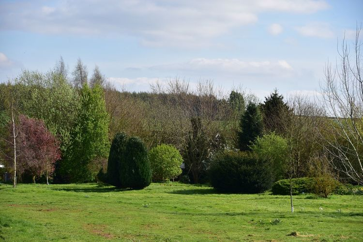 Taking Photos Harlaxton Landscape Trees Contrast Nikon D5500
