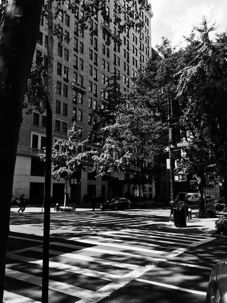 Black And White Friday Building Exterior Architecture Tree Built Structure City Street Outdoors Day Road Growth No People Road Sign Nature Sky New York Newyorkcity