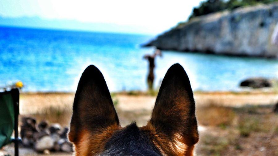 Bearontheguard Odin Safeplace Is Nextbyme Dogslovers Germanshephard Photooftheday Eyeemphoto