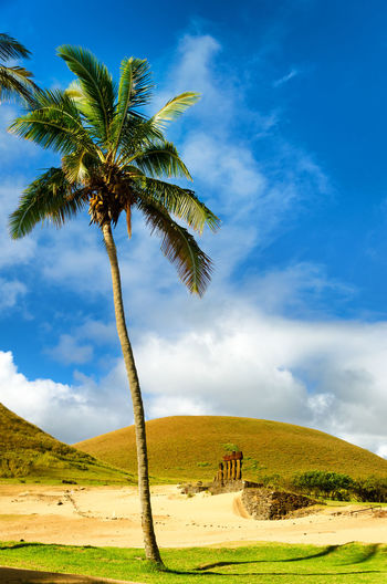Palm tee on field against sky