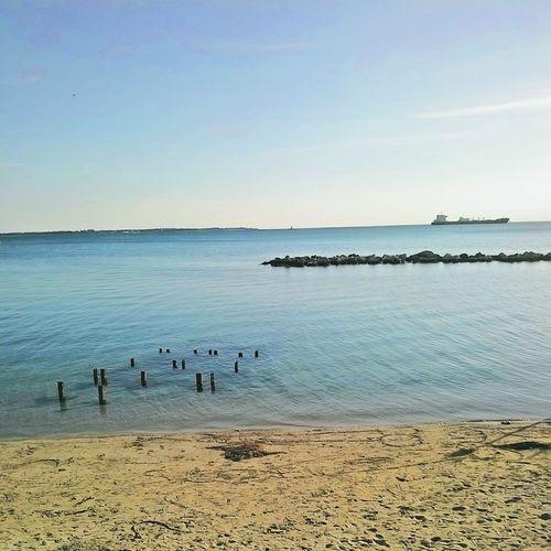 Bird Sea Beach