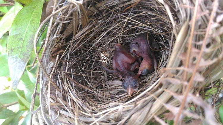 baby bird to sleep Hug INDONESIA Anakburung Animal Animals In The Wild Babycage Bayi Bird Bird Nest Botany Burung Cage Day Dua Outdoors Sangkar Sleeping Young Animal Young Bird