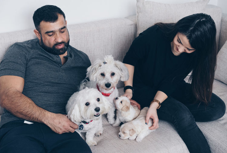 High Angle View Of Couple Sitting With Dogs Family On Sofa At Home