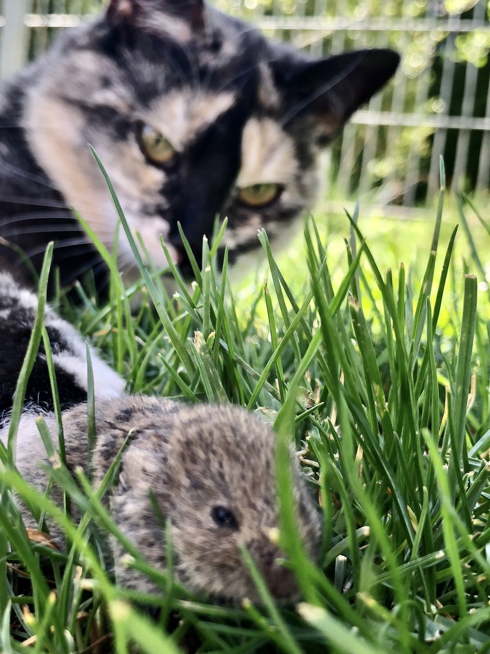 CAT LYING IN GRASS