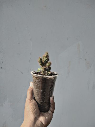 Midsection of person holding potted plant against wall