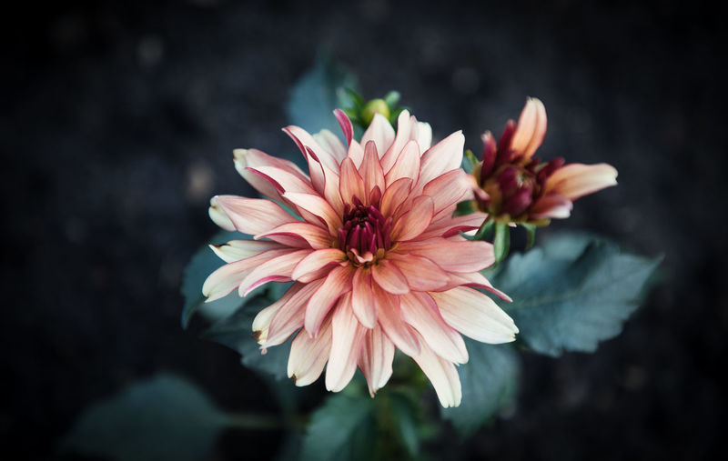 Macro Photography Beauty In Nature Close-up Day Detail Flower Flower Head Flowering Plant Focus On Foreground Fragility Freshness Growth Inflorescence Macro Nature No People Outdoors Petal Pink Color Plant Pollen Vulnerability  Wallpaper