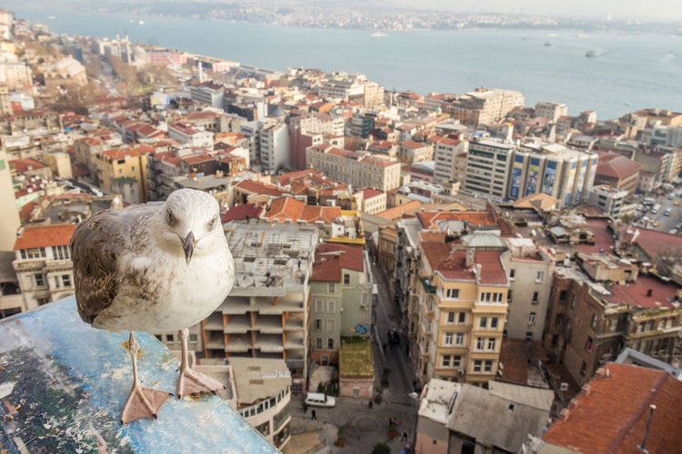 Seagull in Istanbul Istanbul Seagull Istanbul Turkey Architecture Building Exterior Animal Themes City Animal Built Structure Bird One Animal Water Day Sea Building Nature Vertebrate Animals In The Wild High Angle View Animal Wildlife Cityscape No People Outdoors TOWNSCAPE