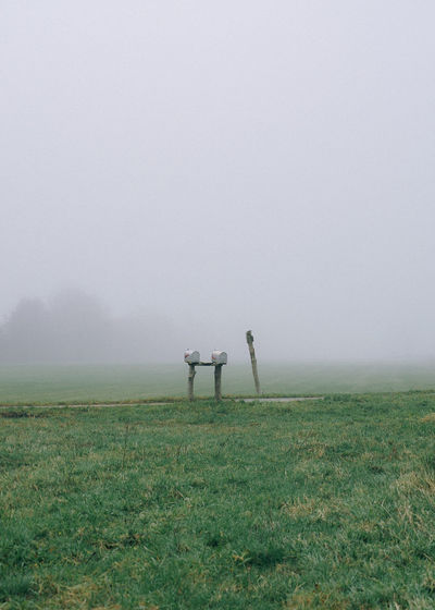 Mailboxes on grassy field during foggy weather