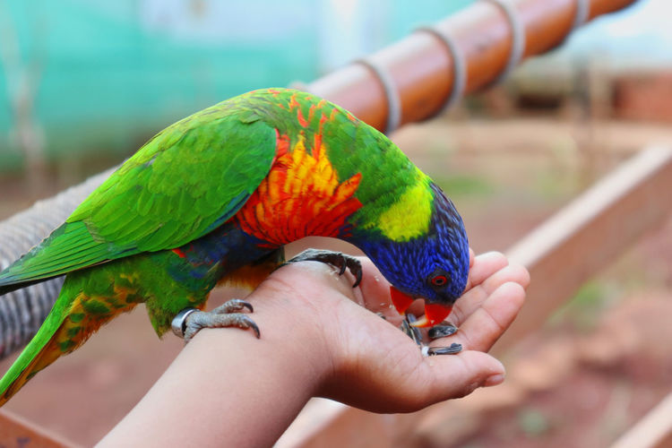 Cropped image of hand holding multi colored leaf