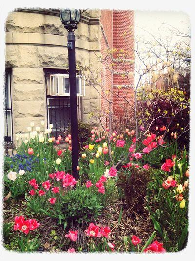 Spring Has Sprung Bkluv