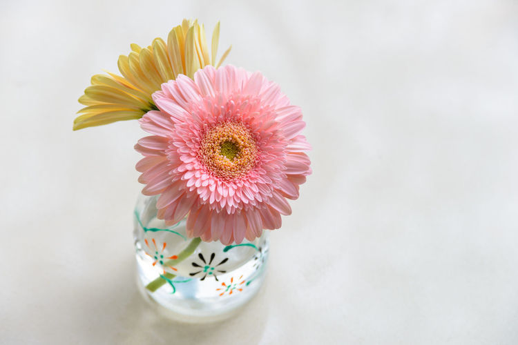 Close-up of pink daisy flower on table