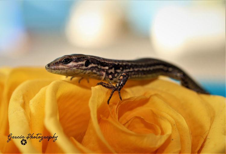 Reptile Close-up