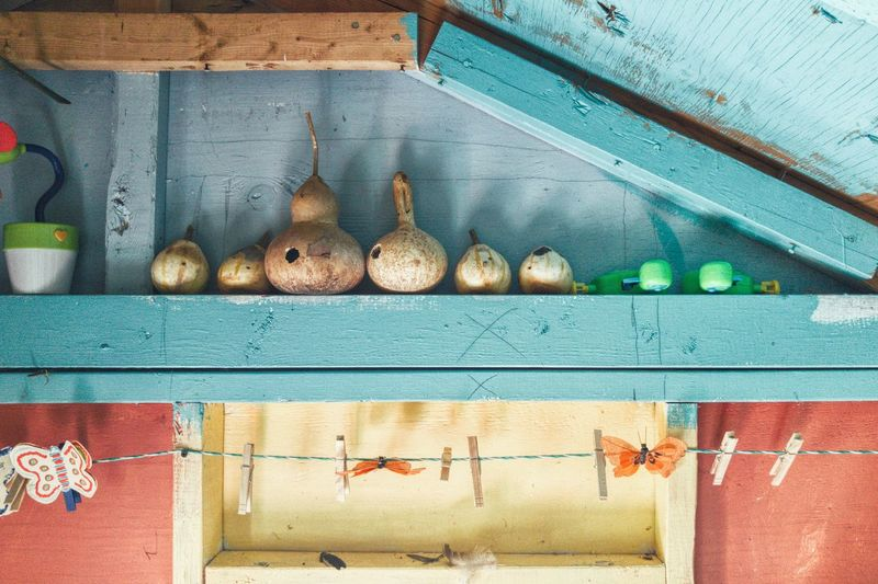 Low Angle View Of Gourds On Wooden Shelves At Home