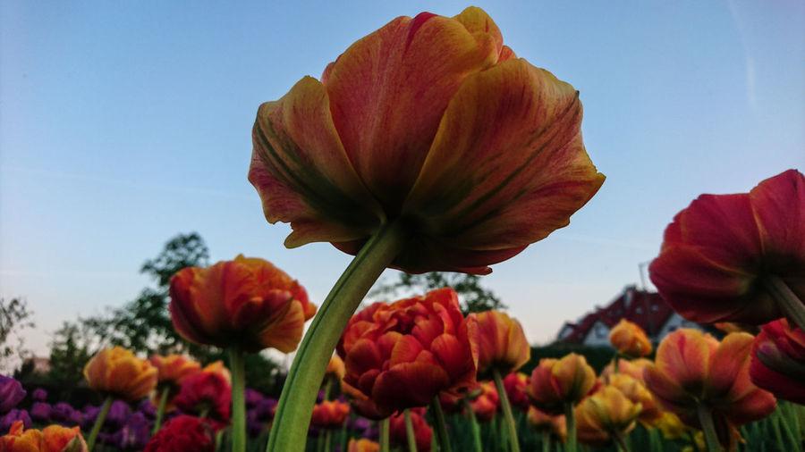 under flowers