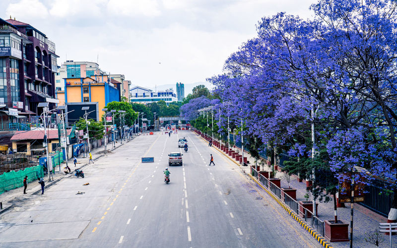 Street amidst plants and buildings in city against sky