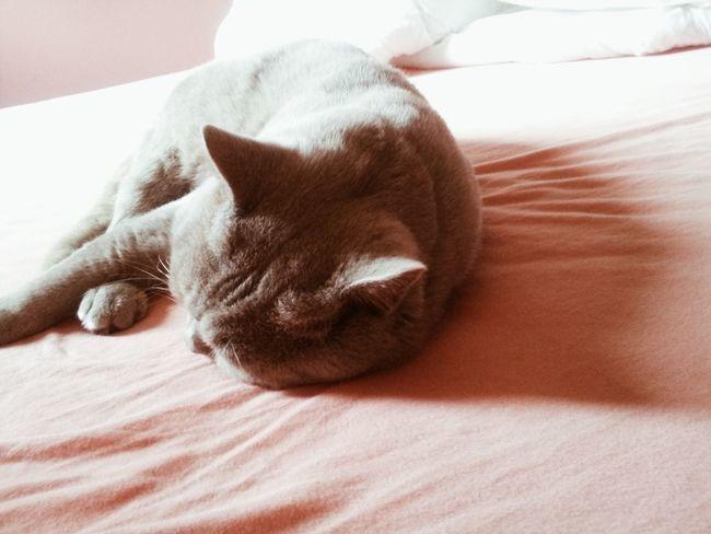 Cat Animal Silhouette Myownpicture