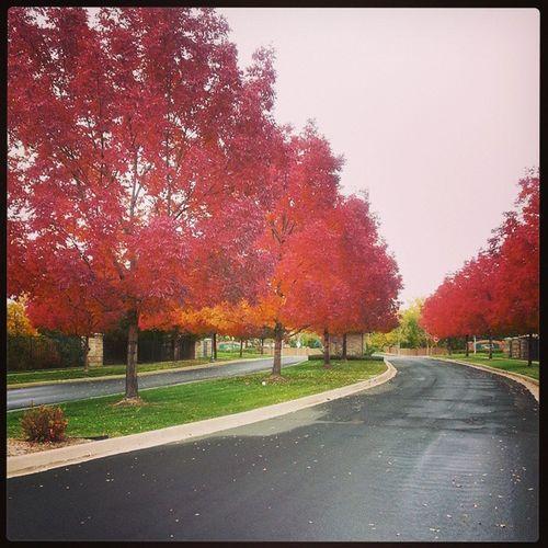 My drive to go get snacks for the game. Denver 303 EastlakeColorado Autumn Feelslikefall FavoriteSeason TheseTreesAreOnFire !