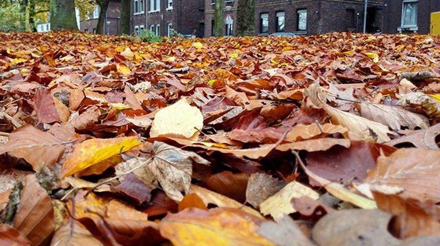 Herbst oder wie? Also zumindest vom Blätter Meer her. 😂